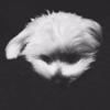 https://cdn.damnfineshave.com/uploads/avatars/avatar_2113.jpg?dateline=1525786584